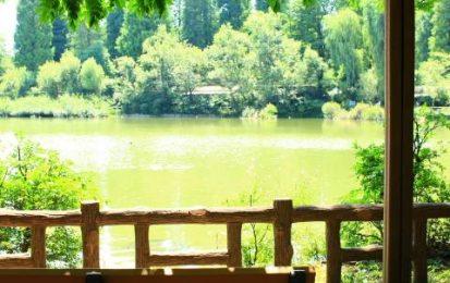 ちょっと早起きして【マイナスイオンチャージ】緑いっぱいのんびりカフェへ